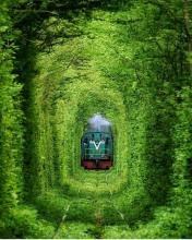 Tunnel of Love (готель)