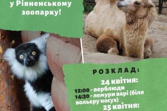 Запрошуємо на показові годівлі тварин!