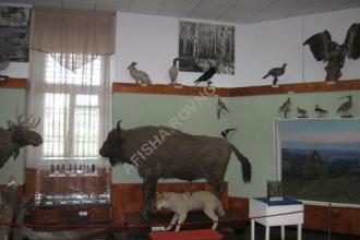 з природничої експозиції музею фото #2